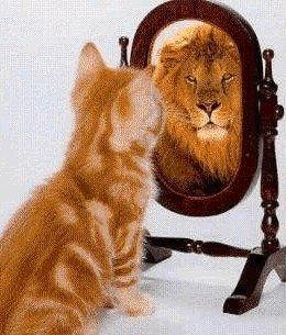 gatto allo specchio