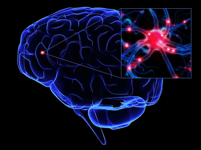 il cervello ricorda