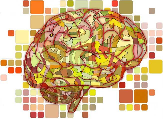 Il tuo stress influisce sul mio cervello