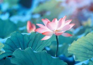 Umiltà intellettuale: La chiave per sviluppare una mentalità aperta